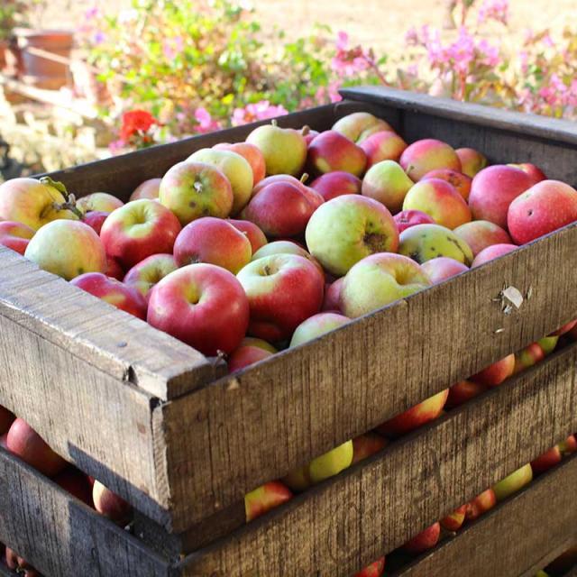 Vergers d'Aulaines caisse de pommes