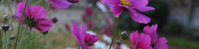 Fleurs dans le jardin potager