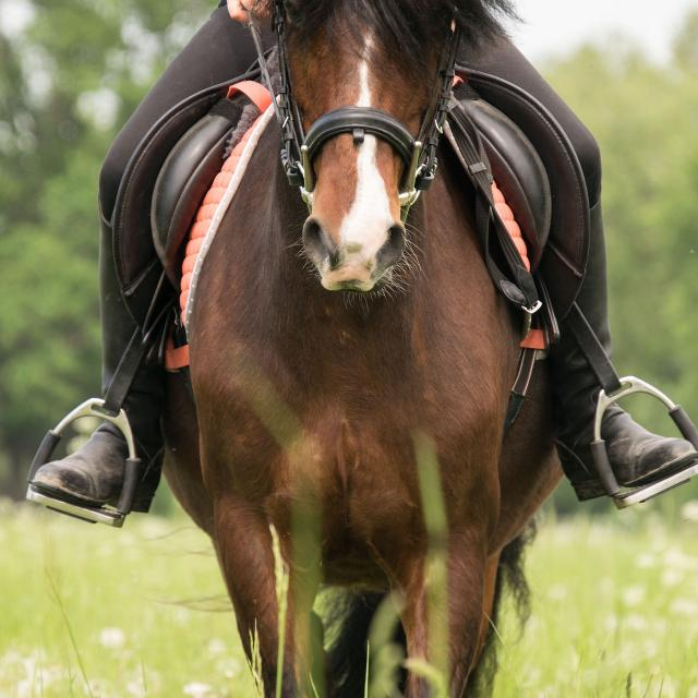 Ride 3389356 1920