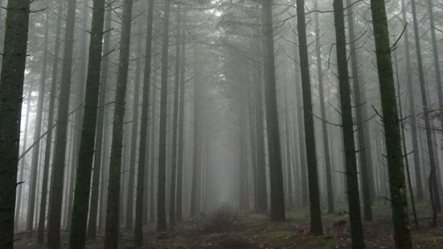 Forêt De Perseigne