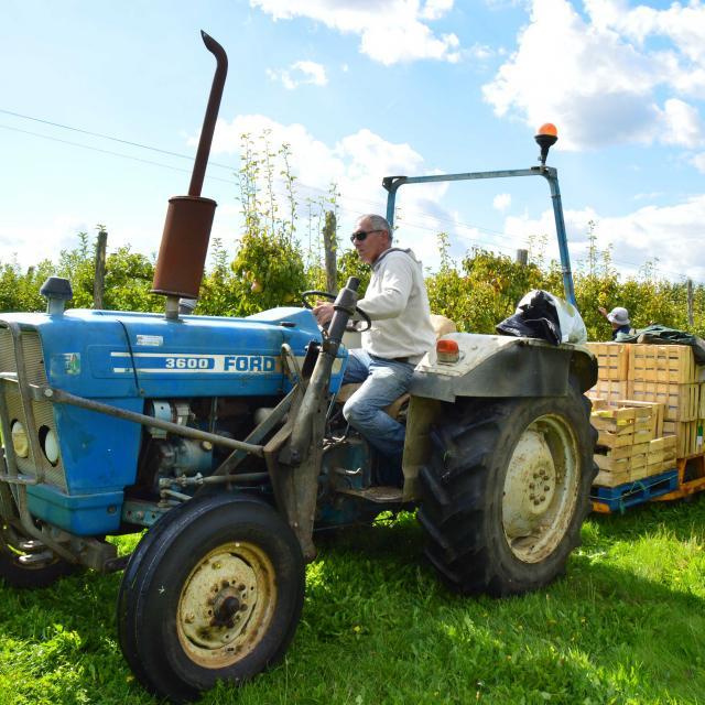 cueillette et ramassage des pommes aux vergers d'aulaines