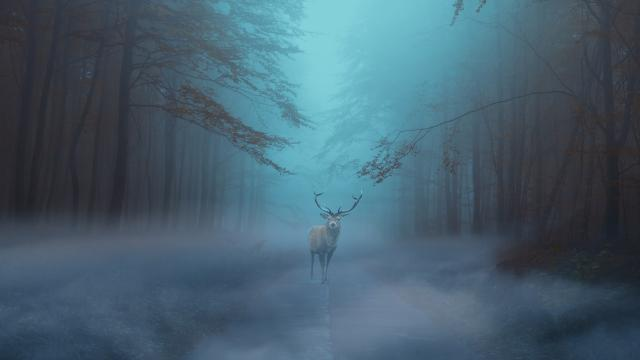 forest-4253766-19201.jpg